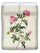 Rosa Sepium Flore Submultiplici Duvet Cover by Pierre Joseph Redoute
