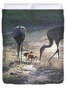 Sandhill Crane Family in Morning Sunshine Duvet Cover by Carol Groenen