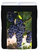 Sauvignon grapes Duvet Cover by Garry Gay