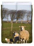 Sheep, Lake District, Cumbria, England Duvet Cover by John Short