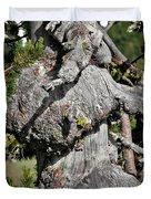 Whitebark Pine Tree - Iconic Endangered Keystone Species Duvet Cover by Christine Till