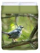 Wild Birds - Gray Catbird Duvet Cover by Christina Rollo