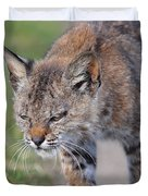 Young Bobcat 03 Duvet Cover by Wingsdomain Art and Photography