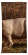 Halloween Pig Beach Towel by Daniel Eskridge