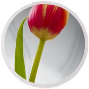 Tulip Round Beach Towel by Sebastian Musial