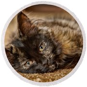 Coco Kitten Round Beach Towel by Trever Miller