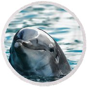 Curious Dolphin Round Beach Towel by Mariola Bitner