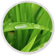 Rain Drops On Grass Round Beach Towel by Trever Miller