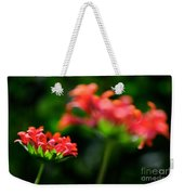 Growing Up Weekender Tote Bag by Lois Bryan