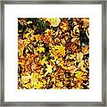 Harmony Framed Print by Lucy D