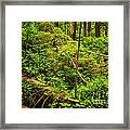 Lush Temperate Rainforest Framed Print by Elena Elisseeva