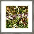 Summer Flowers On The Blue Ridge Parkway 7653 Framed Print by Dan Carmichael