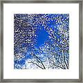 Winter Trees And Blue Sky Framed Print by Elena Elisseeva