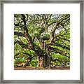 Angel Oak Tree Of Life Framed Print by Dustin K Ryan
