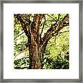 Kingdom Of The Trees. Peradeniya Botanical Garden. Sri Lanka Framed Print by Jenny Rainbow