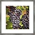 Red Grapes Framed Print by Elena Elisseeva