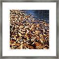 Ussurian Taiga Autumn Framed Print by Anonymous