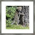 A Whole New World Framed Print by Sandra Bronstein