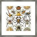 Arachnida Framed Print by Georgia Fowler