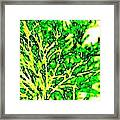 Arbres Verts Framed Print by Will Borden