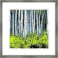 Aspen II Framed Print by Michael Swanson