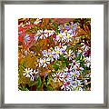 Asters Framed Print by Ron Jones