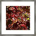 Autumn Breeze Framed Print by Rona Black