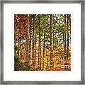 Autumn Canvas Framed Print by Carol Groenen