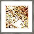 Autumn Leaves Framed Print by Blink Images