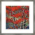 Autumn Reflections Framed Print by Janine Riley