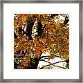 Autumn Smile Framed Print by Jaime Lind