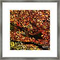 Autumn's Glory Framed Print by Anne Gilbert