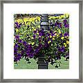 Beautiful Hanging Flowers Framed Print by Sabrina L Ryan
