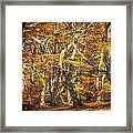 Beech Tree Group In Autumn Light Framed Print by Martin Liebermann