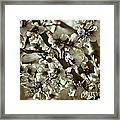 Blossoms Framed Print by Frank Tschakert