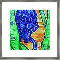 Blue Wolf Framed Print by Derrick Higgins