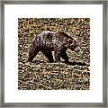 Brown Bears Framed Print by Angel Jesus De la Fuente