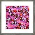 Cactus Pattern 2 Pink Framed Print by Amy Vangsgard