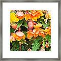 Colorful Flowers Framed Print by Tom Gowanlock