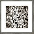 Cottonwood Bark 1 Framed Print by Marilyn Hunt