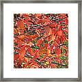 Crabapple Framed Print by Kimberly Maxwell Grantier