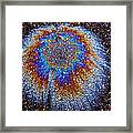 Crown Of Creation Framed Print by Samuel Sheats