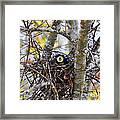 Eggstraordinary Framed Print by Al Powell Photography USA