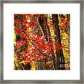 Fall Forest Detail Framed Print by Elena Elisseeva