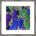 Festival Of Grapes Framed Print by Eloise Schneider