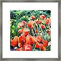 Field Of Flowers Framed Print by Jeff Kolker