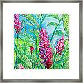 Ginger Jungle Framed Print by Kelly     ZumBerge