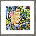Gordon S Cat Framed Print by Hilary Jones