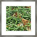 Green Beans In Baskets At Farmers Market Framed Print by Teri Virbickis