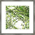 Green Leaves Framed Print by Blink Images